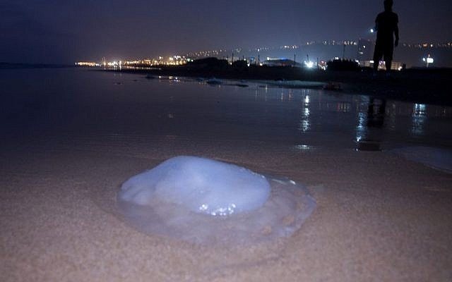 A dead jellyfish on the beach in Haifa. (photo credit: Shay Levy/Flash90)