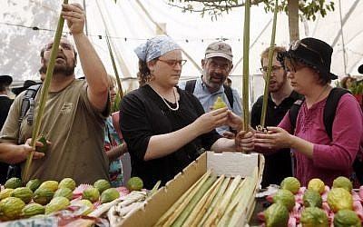 Examining palm-branches and citrons, known as lulav and etrog, for imperfections, at the 'four-species' market in Jerusalem on September 16, 2013. (illustrative photo credit: Miriam Alster/Flash90)