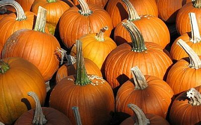 Stir some pumpkin into your cocktail (Courtesy Wiki Commons)