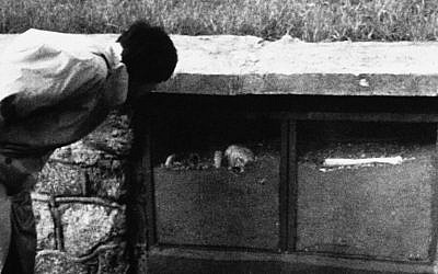 A visitor to the site of the former World War II Nazi death camp at Sobibor in eastern Poland, examines a display case containg the ashes and bones of victims of the camp's gas chambers, Nov. 6, 1987. The mound in the background is formed by human ashes. (photo credit: AP Photo/Czarek Sokolowski)