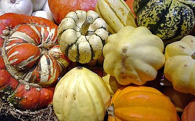 An assortment of squashes (photo credit: Californiacondor (Own work) [GFDL (http://www.gnu.org/copyleft/fdl.html), CC-BY-SA-3.0)