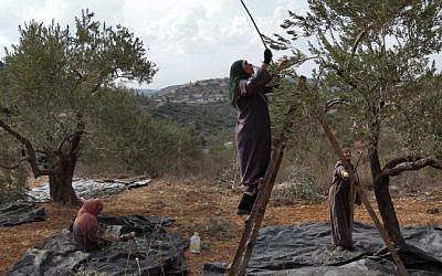 Illustrative photo of Palestinian women picking olives. (Nati Shohat/Flash90)