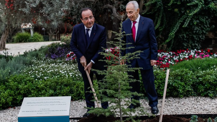 French President Francois Hollande (L) and President Shimon Peres plant a tree during a welcoming ceremony held at the president's residence in Jerusalem, Israel, 17 November 2013 (photo credit: Uri Lenz/GPO/Flash90)