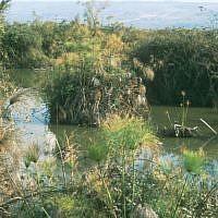 Huleh Nature Reserve (photo credit: Shmuel Bar-Am)