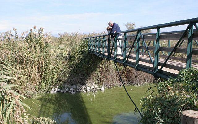 Catfish-watching from the bridge at Huleh Nature Reserve (photo credit: Shmuel Bar-Am)
