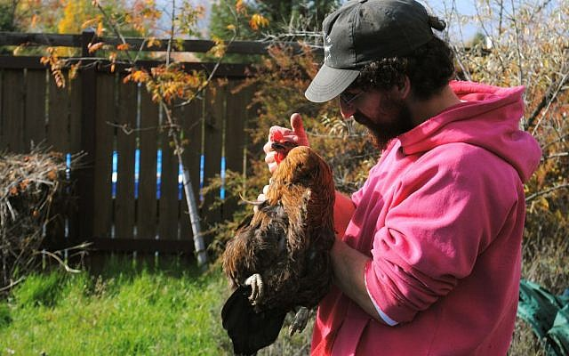 Josh Shupack comforting a chicken before slaughtering the bird in his Oregon backyard, Nov. 6, 2013. (photo credit: Rebecca Spence/JTA)