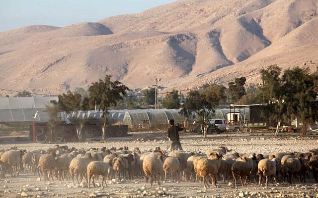 A Palestinian shepherd in the Jordan valley, November 20, 2009. (photo credit: Yossi Zamir/Flash90)