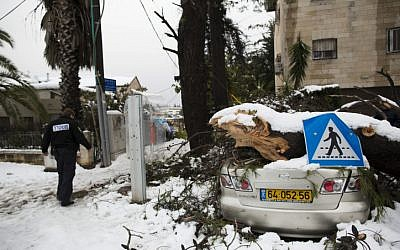 A car damaged by a tree which fell due to a heavy storm in Jerusalem. December 14, 2013. (photo credit: Yonatan Sindel/Flash90)