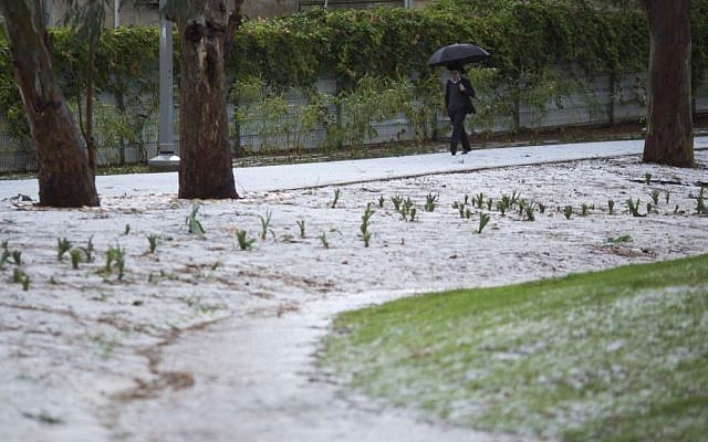 An ultra-Orhodox man walks in a hailstone covered park in Tel Aviv on Friday (photo credit: AP/Ariel Schalit)