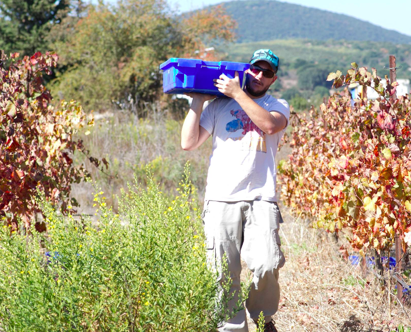 Yehuda Nah, the Jezreel winemaker, out in the fields (Courtesy Jezreel Winery)