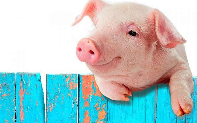 Illustrative (Pig via Shutterstock)
