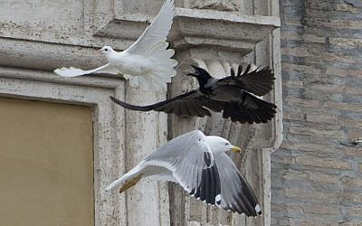 A dove which was freed by children flanking  Pope Francis is chased by a black crow and a seagull at the Vatican, Sunday, Jan. 26, 2014.  (photo credit: AP/Gregorio Borgia)
