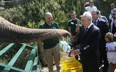 President Shimon Peres has a close encounter with an elephant at the Jerusalem Biblical Zoo,  July 02, 2013. (photo credit: Miriam Alster / Flash90)