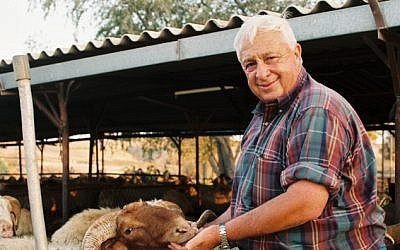 Ariel Sharon tending to the livestock on his Sycamore Ranch in 1993. (photo credit: Gideon Markowicz/Flash90)