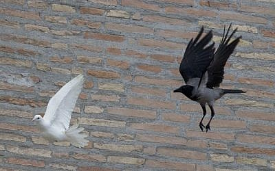 A dove which was freed by children flanked by Pope Francis during the Angelus prayer, is chased by a black crow in St. Peter's Square, at the Vatican, Sunday, Jan. 26, 2014. (photo credit: AP/Gregorio Borgia)