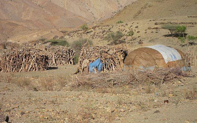 A Danakil encampment in Ethiopia (http://www.shutterstock.com/pic-133408118/stock-photo-nomad-huts-made-of-cast-off-debris-are-common-in-the-danakil-desert-of-ethiopia.html?src=pd-same_artist-133407902-LFxM08i5cfl1qcGlZeWmQw-2 via Shutterstock)