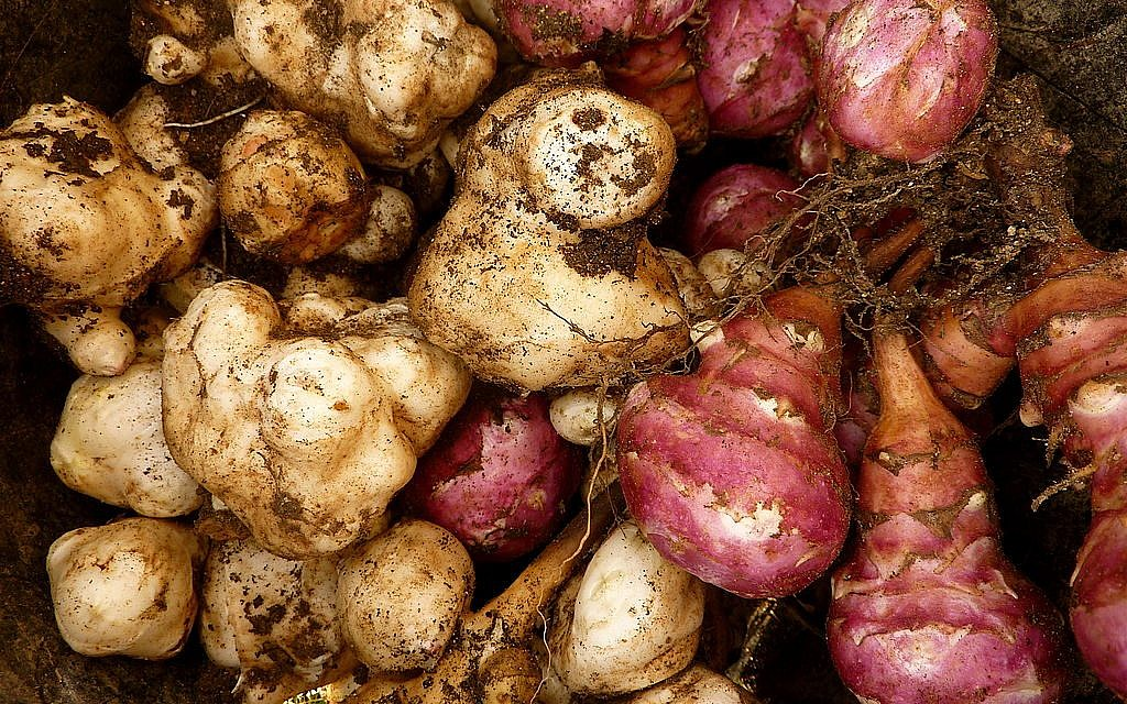 Jerusalem artichokes lack starch, and are a good addition to soups and stews (By Christian Guthier/CC-BY-Flickr)