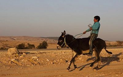 A Bedouin boy rides a donkey in the village of Umm al-Hiran, in the Negev, December 19, 2013. (Photo credit: Yaakov Naumi/Flash90)