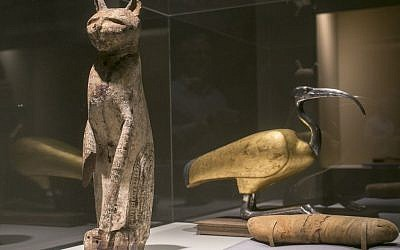 """A cat coffin with mummy, left, and an ibis coffin is displayed as part of the exhibit """"Soulful Creatures: Animal Mummies in Ancient Egypt,"""" at the Orange County's Bowers Museum in Santa Ana, Calif. (photo credit: AP/Damian Dovarganes)"""
