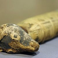"""A Dog Mummy is displayed as part of the exhibit """"Soulful Creatures: Animal Mummies in Ancient Egypt,"""" at the Orange County's Bowers Museum in Santa Ana, Calif. (photo credit: AP/Damian Dovarganes)"""