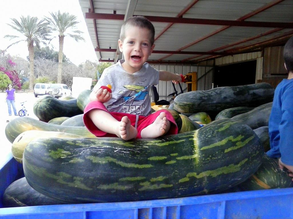 A child sits atop a gigantic pumpkin grown in Ein Yahav (photo credit: Rami Sadeh via Agriculture Ministry)