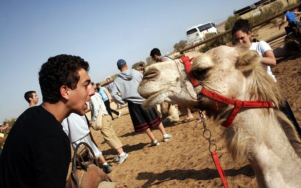 A Birthright participant encountering Israeli fauna. (photo credit: Melanie Fidler/Flash 90)
