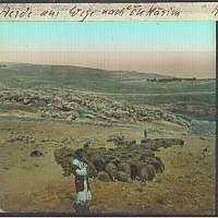 Shepherd with flock in Ein Karem (photo credit: © DEIAHL, Jerusalem)