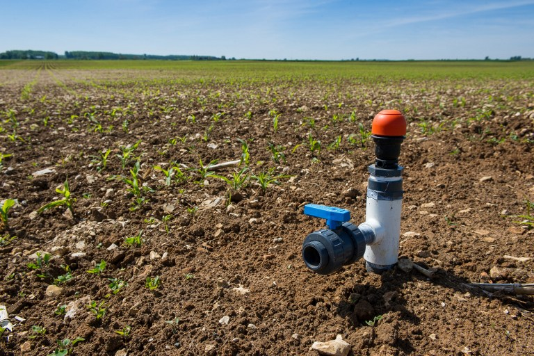 This picture taken on May 5, 2014 shows a drip irrigation system on a cornfield in Pas-de-Jeu (near Thouars, Western France). Drip irrigation was invented in Israel in the 1960s. (photo credit: AFP/Guillaume Souvant)
