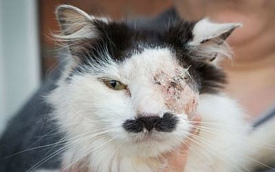 Kirsty Sparrow, the owner of seven-year-old cat Baz, says her pet was attacked because it looks like Hitler (photo credit: YouTube screen grab)