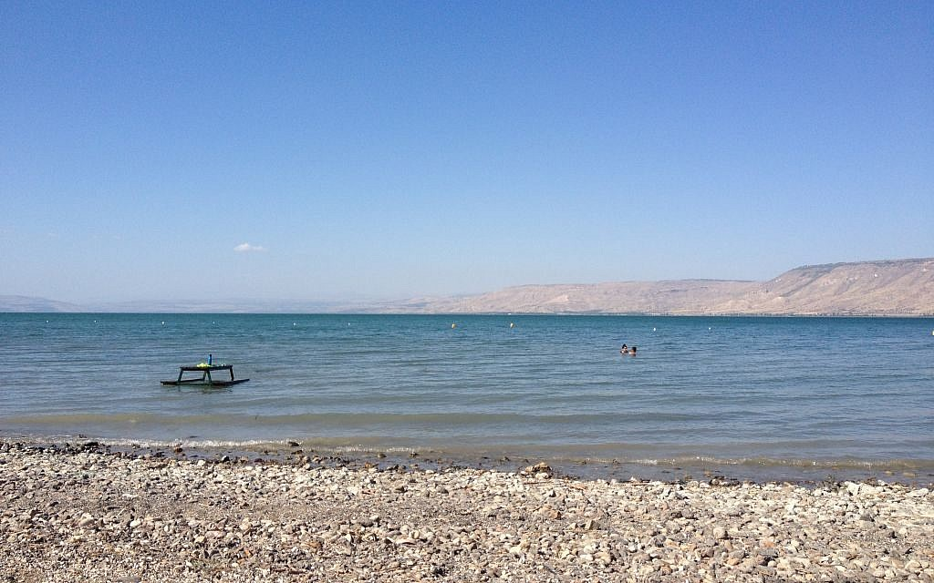 The Jordan River campground has its own beach, a wide expanse of calm waters backing onto shell-scattered sand (photo credit: Jessica Steinberg/Times of Israe)