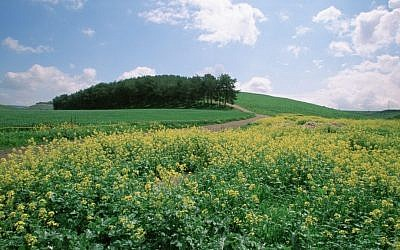 View of a flower-covered field near Mt. Gilboa in the Galilee. (Doron Horowitz/Flash90)