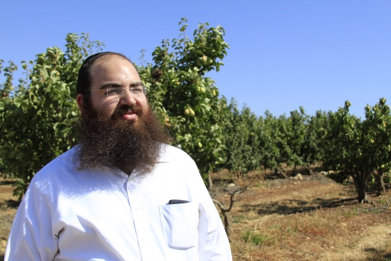 Simcha Margalioth in the pear orchard being used for communal shmita ownership (photo credit: Shterny Boteach/Times of Israel)