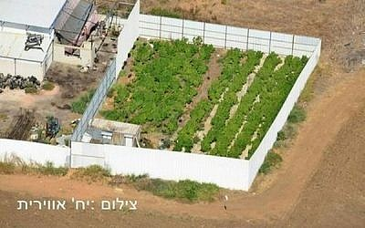 Illustrative: An aerial view of a marijuana growing facility in central Israel (photo credit: Israel Police)