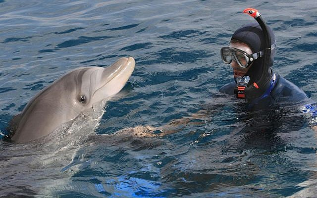 Illustrative photo of an Israeli diver swimming with a dolphin at the Dolphin Reef of the Red Sea in Eilat.  (Nati Shohat /Flash90)