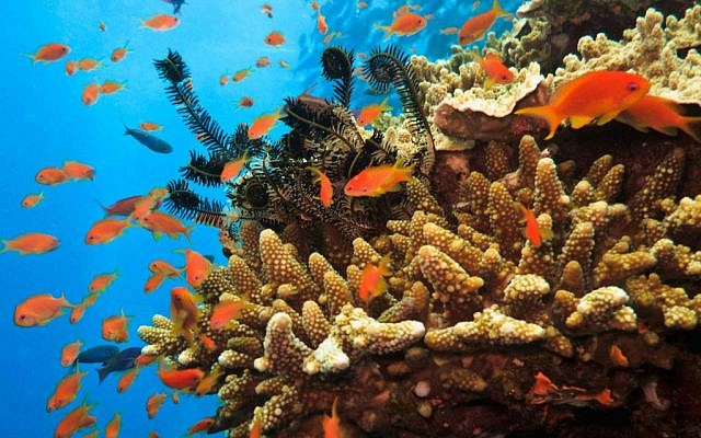 Fish swimming around the Great Barrier Reef. (photo credit: Reef image)