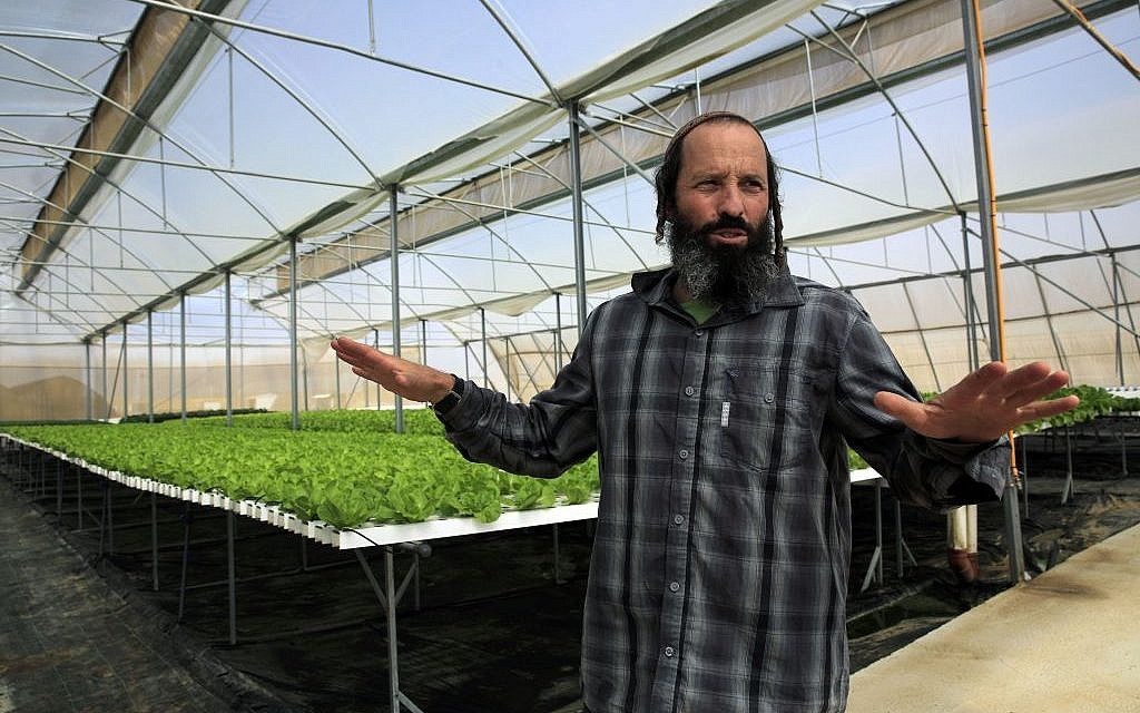 "In this Sunday, Oct. 19, 2014 photo, Gilad Fine, a religious Jewish farmer from Bnei Netzarim, stands inside his greenhouse, between the southern tip of the Gaza Strip and the Egyptian border. Fine grows lettuce and kale using hydroponics on raised platforms to fulfill the biblical commandment to let his farmlands rest every seventh year. His greenhouse follows specific guidelines that certify the produce kosher for the sabbatical year called ""shmita"" in Hebrew, that began last month on the Jewish New Year, and extends through the fall of 2015. (photo credit: AP Photo/Tsafrir Abayov)"