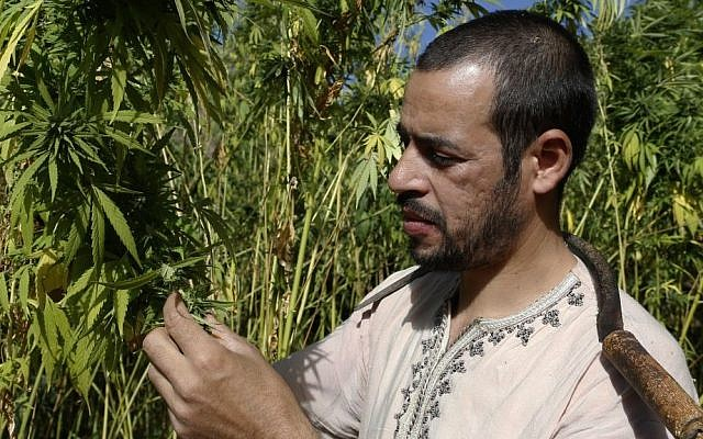 Abdelkhalek Ben Abdellah inspects his cannabis fields in the Rif mountains in the Village of Bni Hmed in Ketama Abdelghaya valley, northern Morocco, on September 14, 2014. (photo credit: AP Photo/Abdeljalil Bounhar)