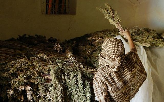 A man stores bundles of cannabis inside a drying room in the village of Tasfout Bni Bounsar, northern Morocco. on September 14, 2014. (photo credit: AP Photo/Abdeljalil Bounhar)