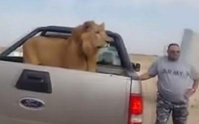Iraqi militiamen take photos with a lion at a checkpoint near Samarra (Photo credit: Youtube screen capture)
