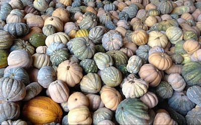 Every kind of gourd at Moshe Tellem's Rishpon farm (photo credit: Jessica Steinberg/Times of Israel)