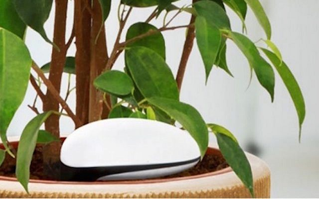 A 'connected' plant using Agrolan wi-fi technology (Photo credit: Courtesy)