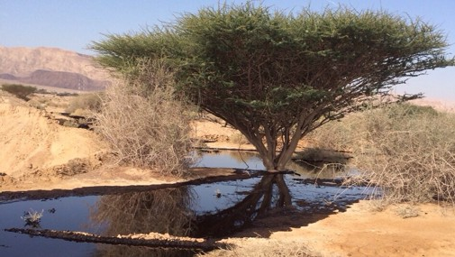 The oil leak in the Arava area of Southern Israel, on December 4, 2014.  (photo credit: Nature and Parks Authority)