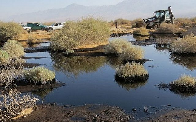 Oil seeps between desert bushes in the Evrona Nature Reserve, December 7, 2014. (photo credit: Environmental Protection Ministry spokesperson/Roi Talbi)