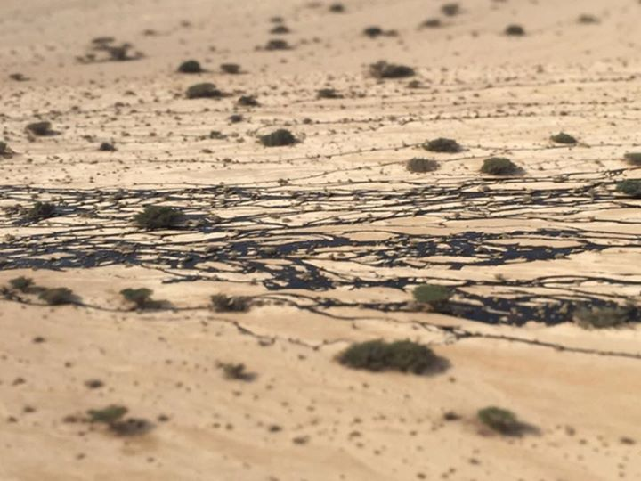 Oil seeps between desert bushes in the Evrona nature reserve, Sunday December 7, 2014. (photo credit: Facebook / Tamar Zandenburg)
