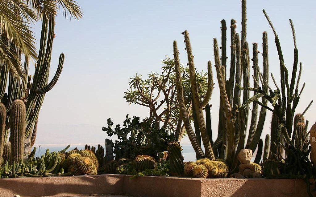 Cactuses at Ein Gedi Botanical Gardens (photo credit: Shmuel Bar-Am)
