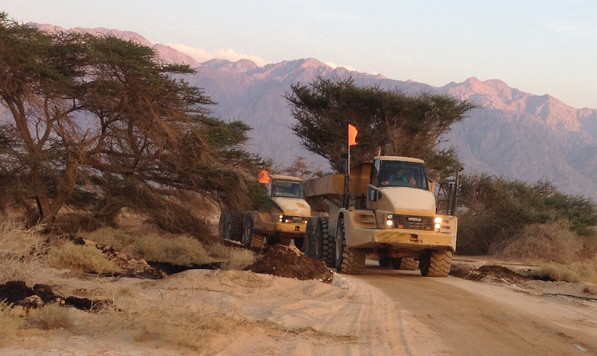Dump trucks plow through the Evrona Nature Reserve, removing oil-soaked dirt (Photo credit: Courtesy)