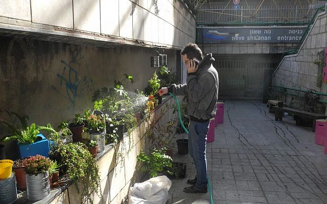 Yoav Shafranek waters the community garden built in an abandoned pedestrian passageway that used to lead to a lower floor of the Central Bus Station. Onya Collective organized concerts in the garden during the exhibition. (photo credit: Melanie Lidman/Times of Israel)