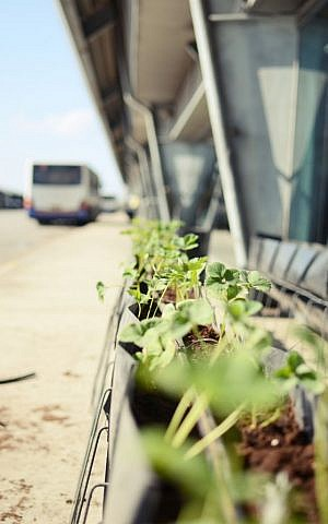The urban agriculture experiment on the 7th floor of the bus station. Not for consumption. (photo courtesy: Urban Farming Roof Lab: RuachShtut with Onya Collective)