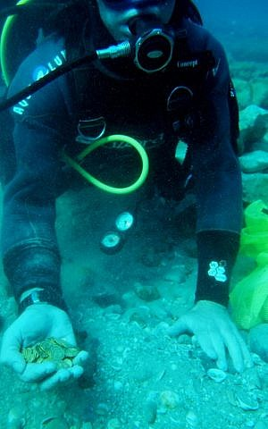Gold coins found off the coast of Caesarea by divers (photo credit: Kobi Sharvit, courtesy of the Israel Antiquities Authority)