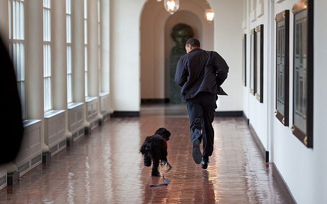 President Barack Obama runs down the East Colonnade with family dog, Bo, on the dog's initial visit to the White House, March 15, 2009. (photo credit: White House/Pete Souza)